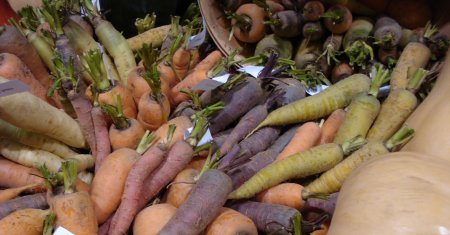 A rainbow of colourful carrots.