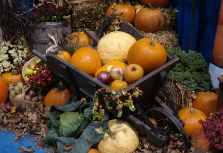 The fall harvest – looking good.
